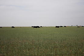 Photo of 00 Highway 86 Dimmitt, TX 79027