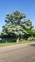 Photo of 311 Pecan Panhandle, TX 79068