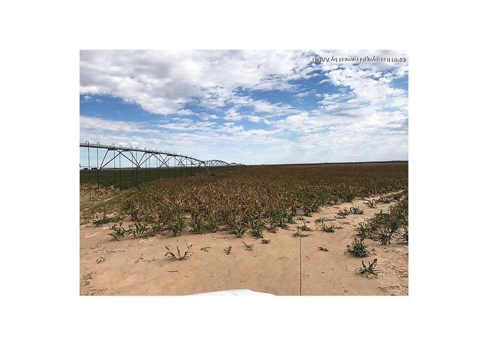 Photo of Sherman County +/-720 Sunray, TX 79086