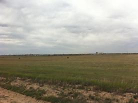 Photo of Cr 34 Amarillo, TX 79118