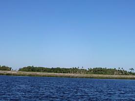 Photo of . Dan May Private Island Undetermined-suwannee, FL 32692