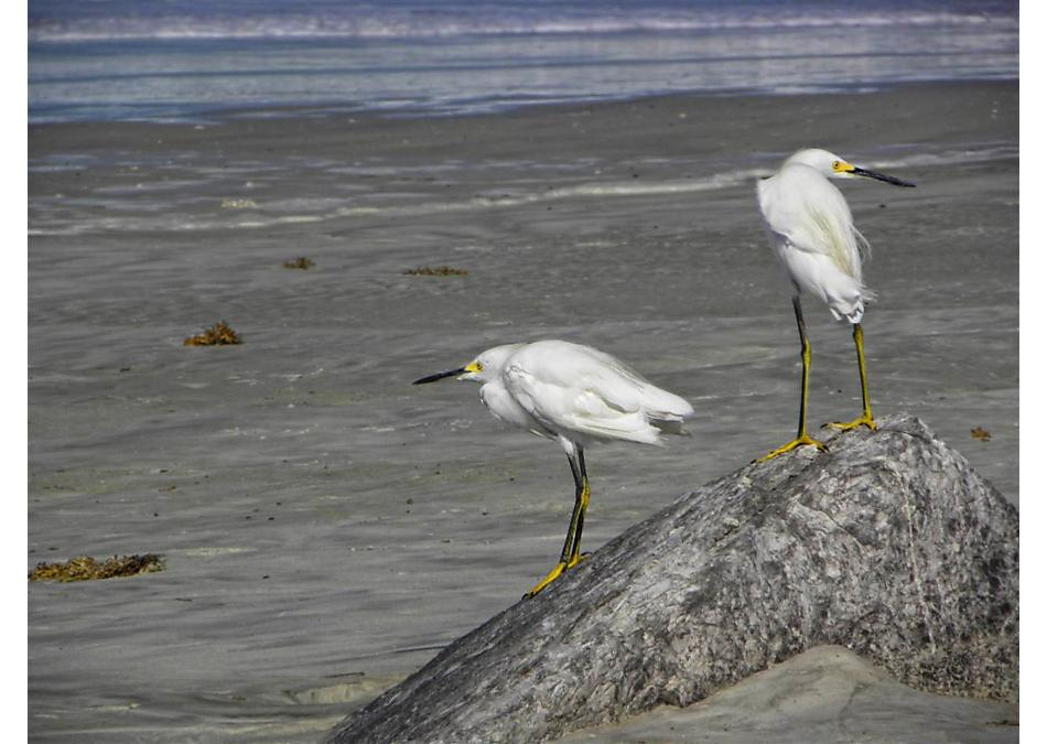 Photo of 147 N Coopers Hawk Way Palm Coast, FL 32164
