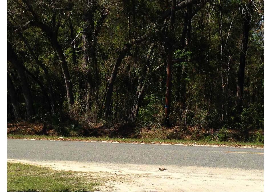 Photo of 212 Squirrel Tree Tr Satsuma, FL 32189