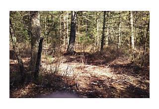 Photo of Chestnut Middleboro, Massachusetts 02346