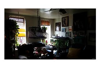 Photo of 946   Hoe Avenue Bronx, NY 10459
