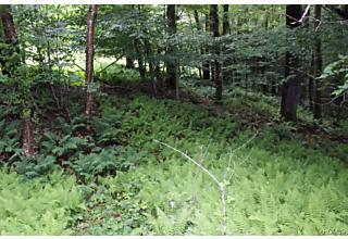 Photo of 20 Willow Drive Livingston Manor, NY 12758